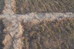 Ungenutzte Fläche die schon bearbeitet wurde und somit wieder Nutzbar ist.