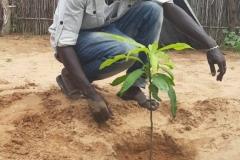 Abdou vollendet die Einpflanzung.