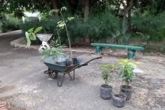 Nach längerem Umschauen, waren wir uns einig, welche Pflanzen wir mitnehmen: Papaja, Mango, Zitronengras und Bäume, die den Boden düngen.