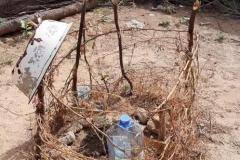 Der selbstgebaute Zaun soll die Ziegen davon abhalten an die Pflanze zu gehen. Diese wurde mit Hilfe der Plastikflaschen- Methode angepflanzt.