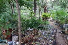 In der ökologischen Landwirtschaft, schauen wir uns die Pflanzen an, die uns zur Verfügung stehen.