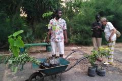 Wir sind uns nun einig, welche Pflanzen wir kaufen und mit in die Dörfer nehmen. Darunter befindet sich Papaya, Mango und Zitronengras.