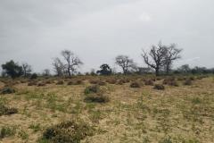 Die Erntezeit ist da. Die Felder sahen eben noch schön grün aus und schnell ist nur noch Sand zu sehen.