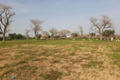 Die Ziegen, Esel und Pferde haben ihren Ausgang auf den freien Feldern rund um das Dorf.