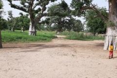 Diese wahnsinnig großen und dicken Bäume sind Baobab-Bäume, oder wie sie auch genannt werden »Affenbrotbaum«.