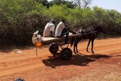 Nachdem der Schneider Oumar uns seine Kleider nach Gapo gebracht hat, verabschiedete er sich und fuhr mit der Kutsche zurück nach Hause.