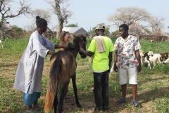 Banique, der »Herr im Haus«, lies uns einem Pferd näher kommen.