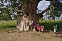 Die Kinder führen uns rum und zeigen uns stolz diesen prächtigen Baum!