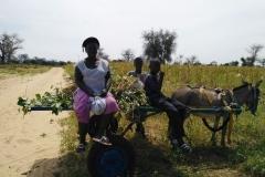 Die Mutter kommt mit ihren Söhnen vom Feld und bringt Erdnüsse mit.