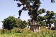 Der wunderschöne, große Baobab-Baum. Ein Hingucker!